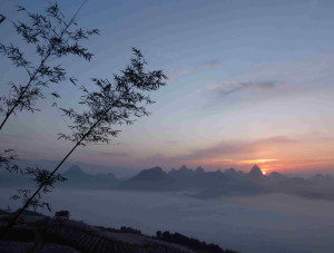 Sunrise_Bamboo_3